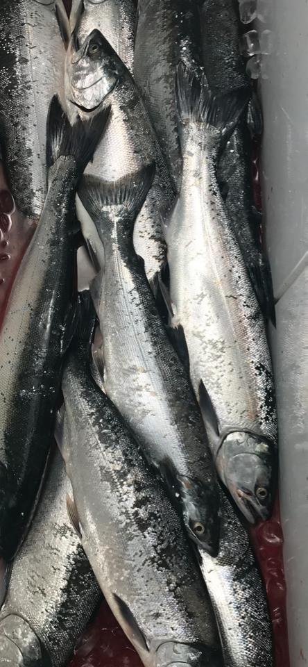 Lake Michigan Fishing Report - 8/5/2019